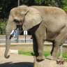 _thumbs/2004-03-06--San Diego Zoo-015.jpg Thumb