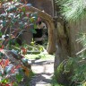 _thumbs/2004-03-06--San Diego Zoo-043.jpg Thumb
