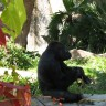 _thumbs/2004-03-06--San Diego Zoo-058.jpg Thumb