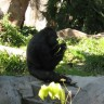 _thumbs/2004-03-06--San Diego Zoo-059.jpg Thumb